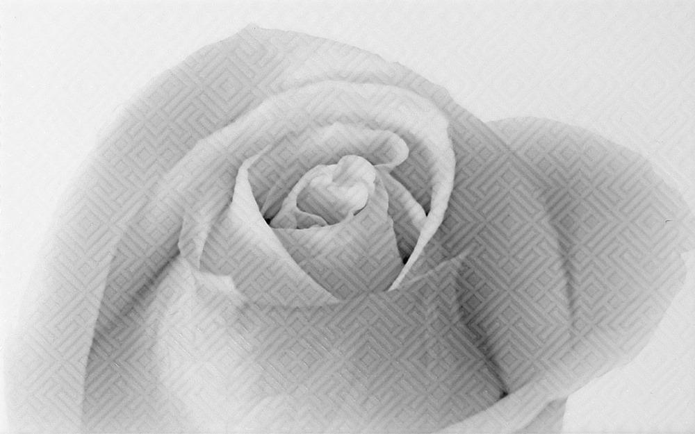 25Х40 Декор керамический Камелия 01 черный фото