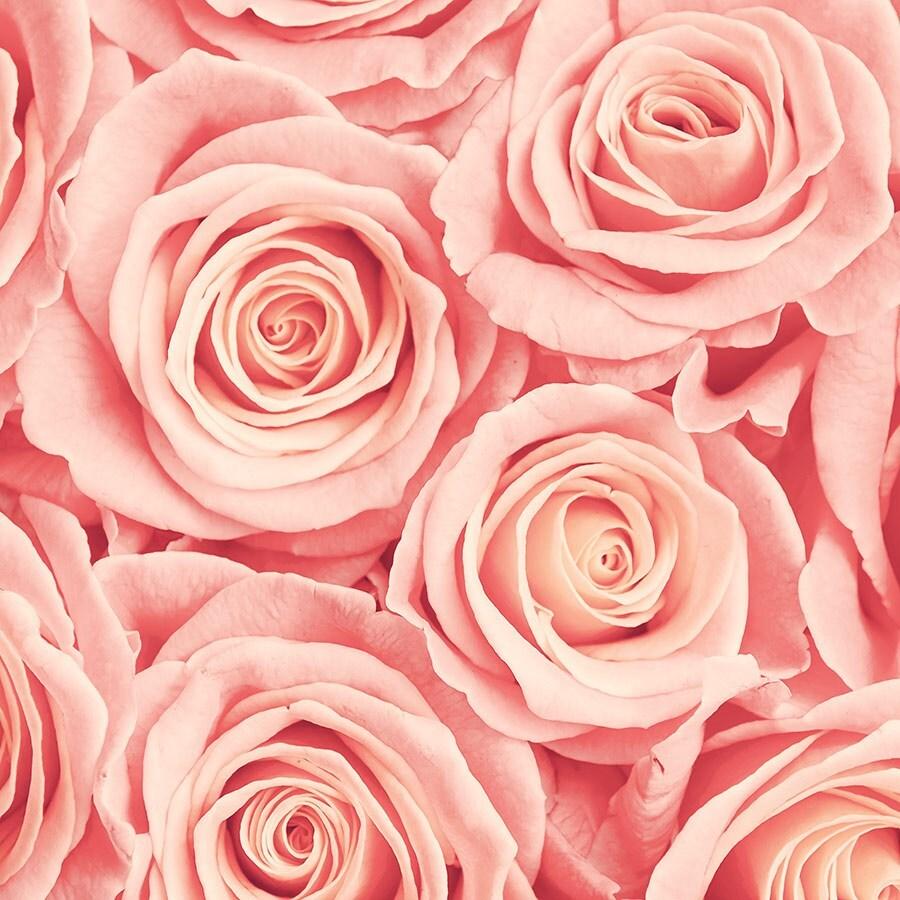 Фотообои картинки розы