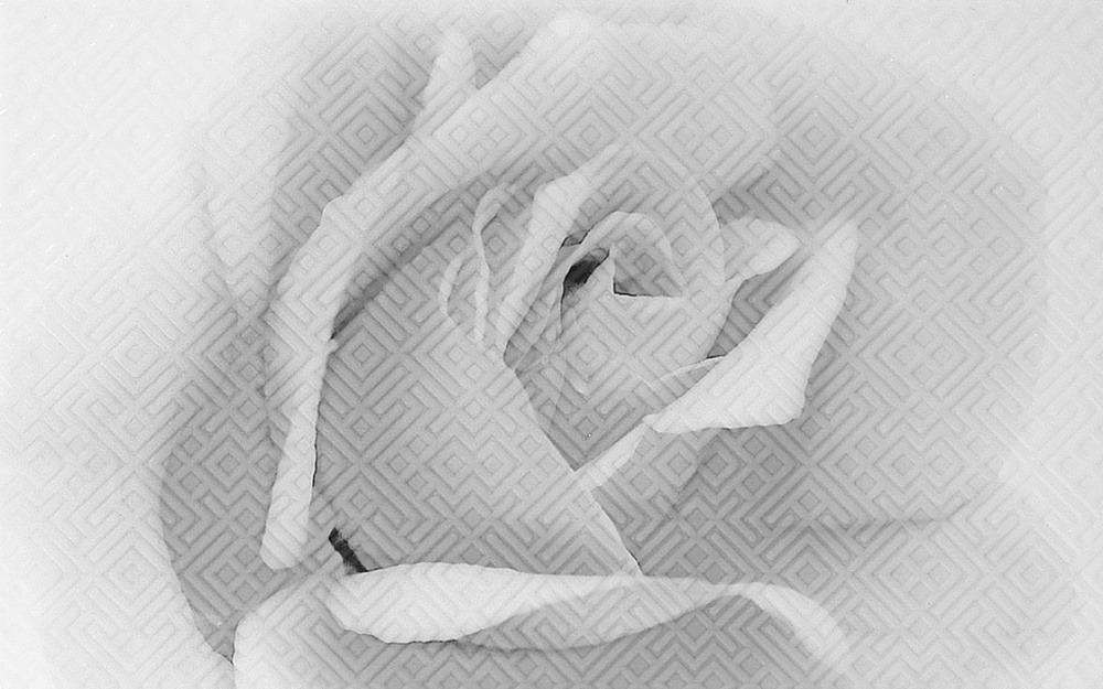25Х40 Декор керамический Камелия 02 черный фото