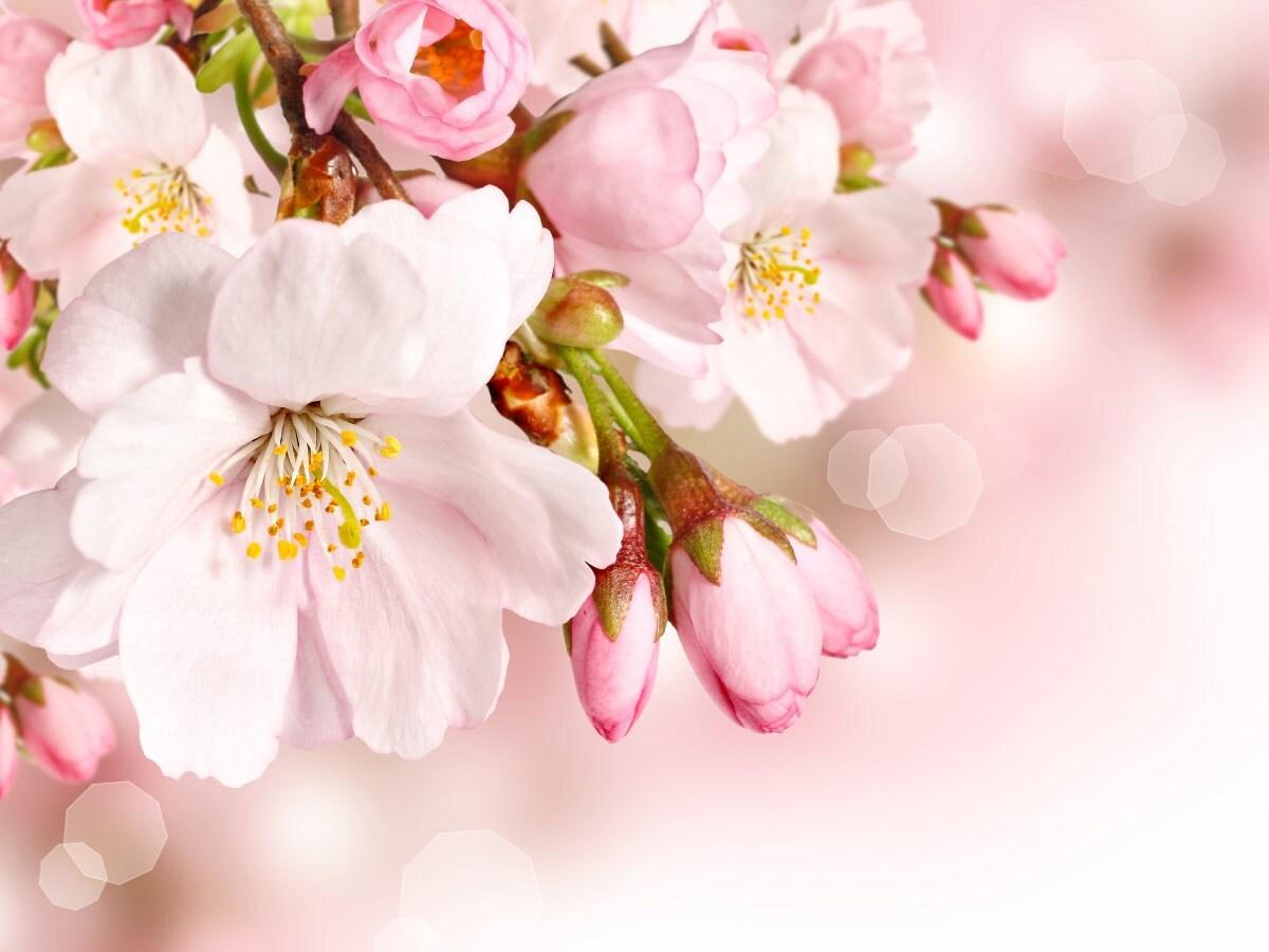 могут картинки весны со светлым фоном лучшего качества картинки