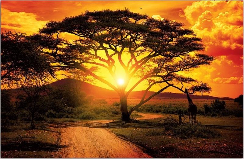 фотообои закат в африке предоставляющие любые