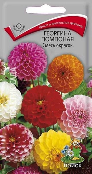 Георгина помпонная Смесь окрасок 0,3гр 200648 фото